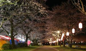 夜桜並木2
